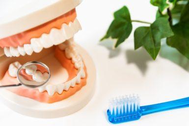 歯のチェックの写真